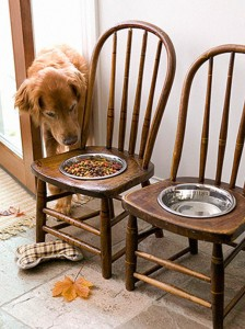DIY dog food holder